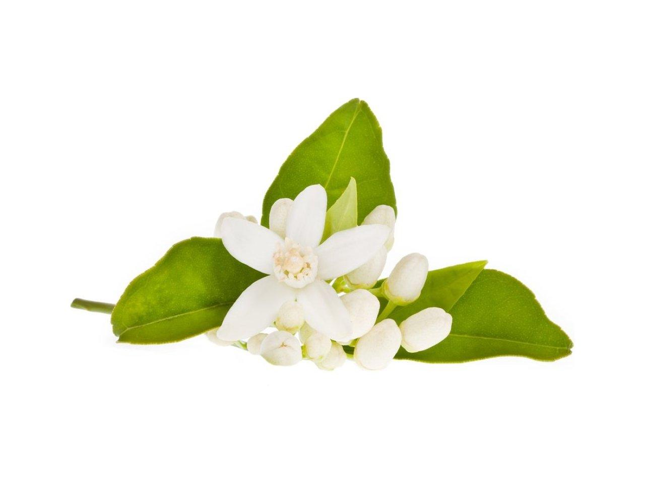aroma de azahar en primavera