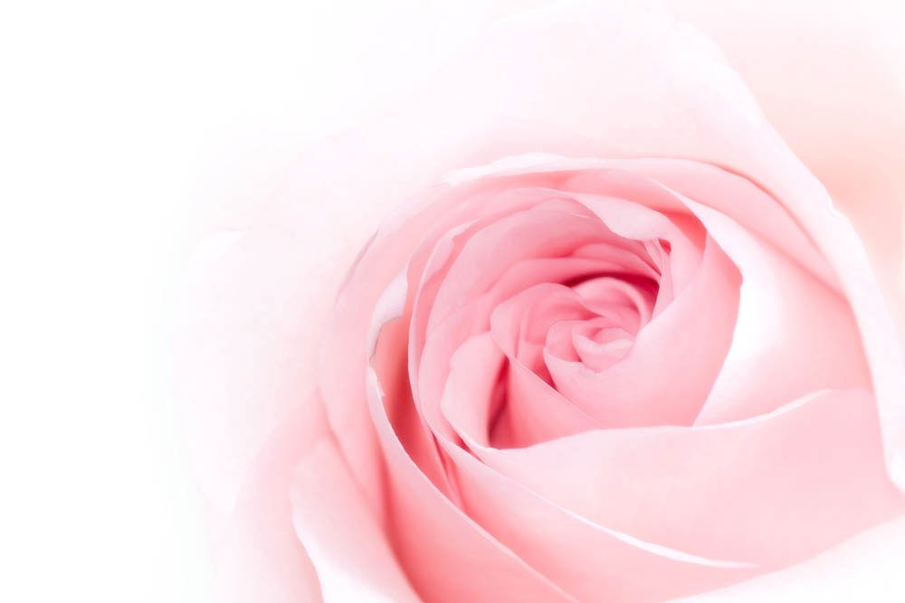 agua de rosa damascena